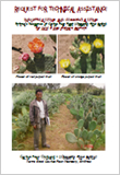 Eritrea's Resources of Cactus Pear Plant